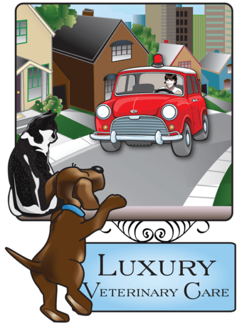 About Luxury Veterinary Care